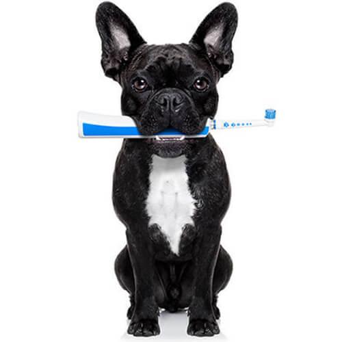 Eureka Vets Ballarat Dog Dentistry