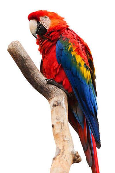 eureka vets ballarat parrot