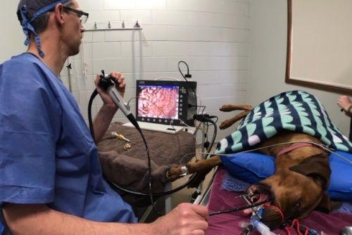 Eureka Vet Endoscopy Surgical Service