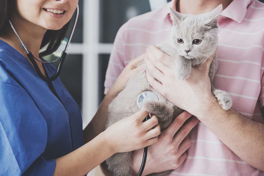 Vaccinations for your Cat