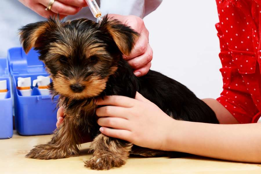 Vaccinations for your Puppy